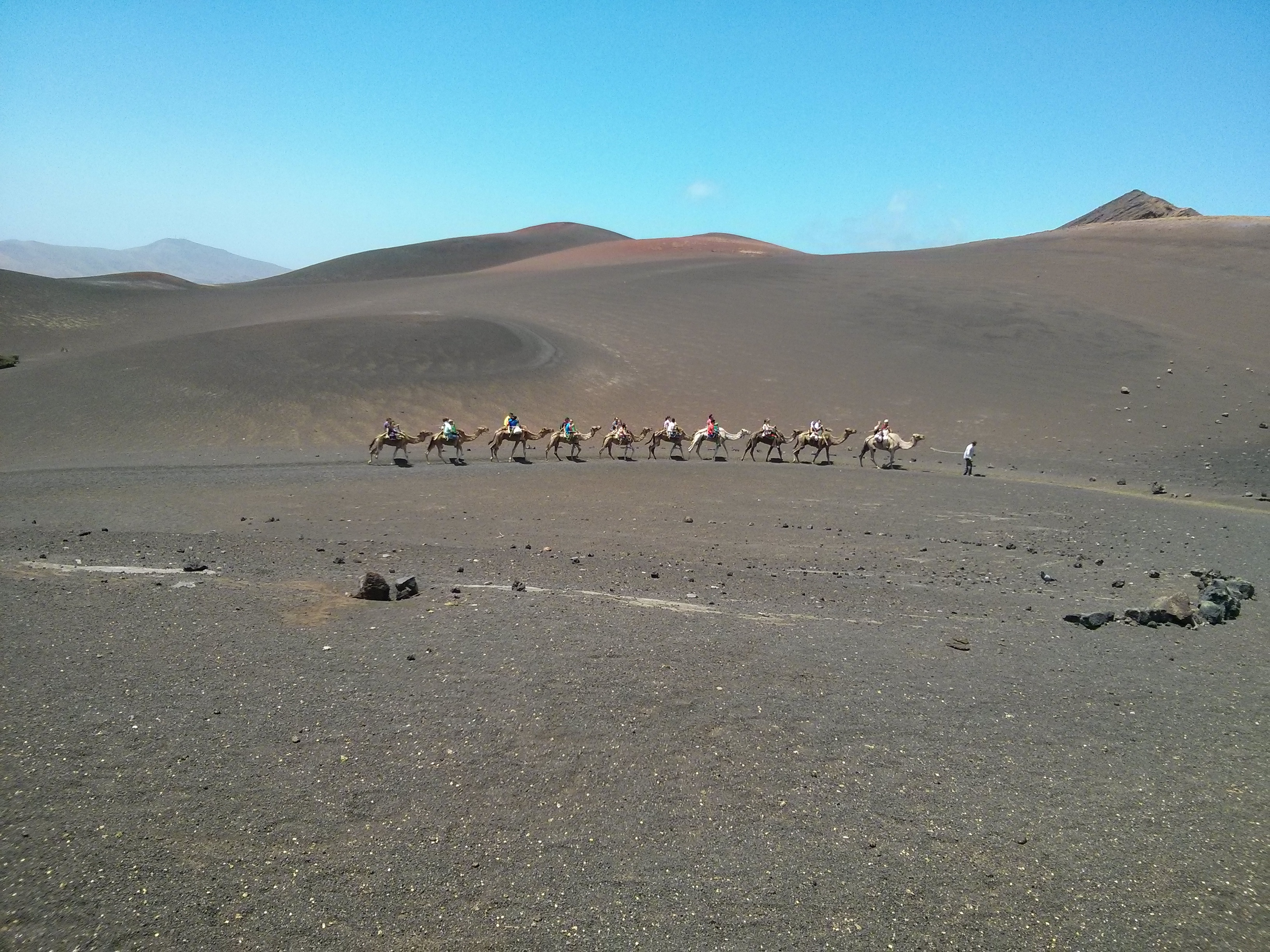 Timanfaya - Camellos
